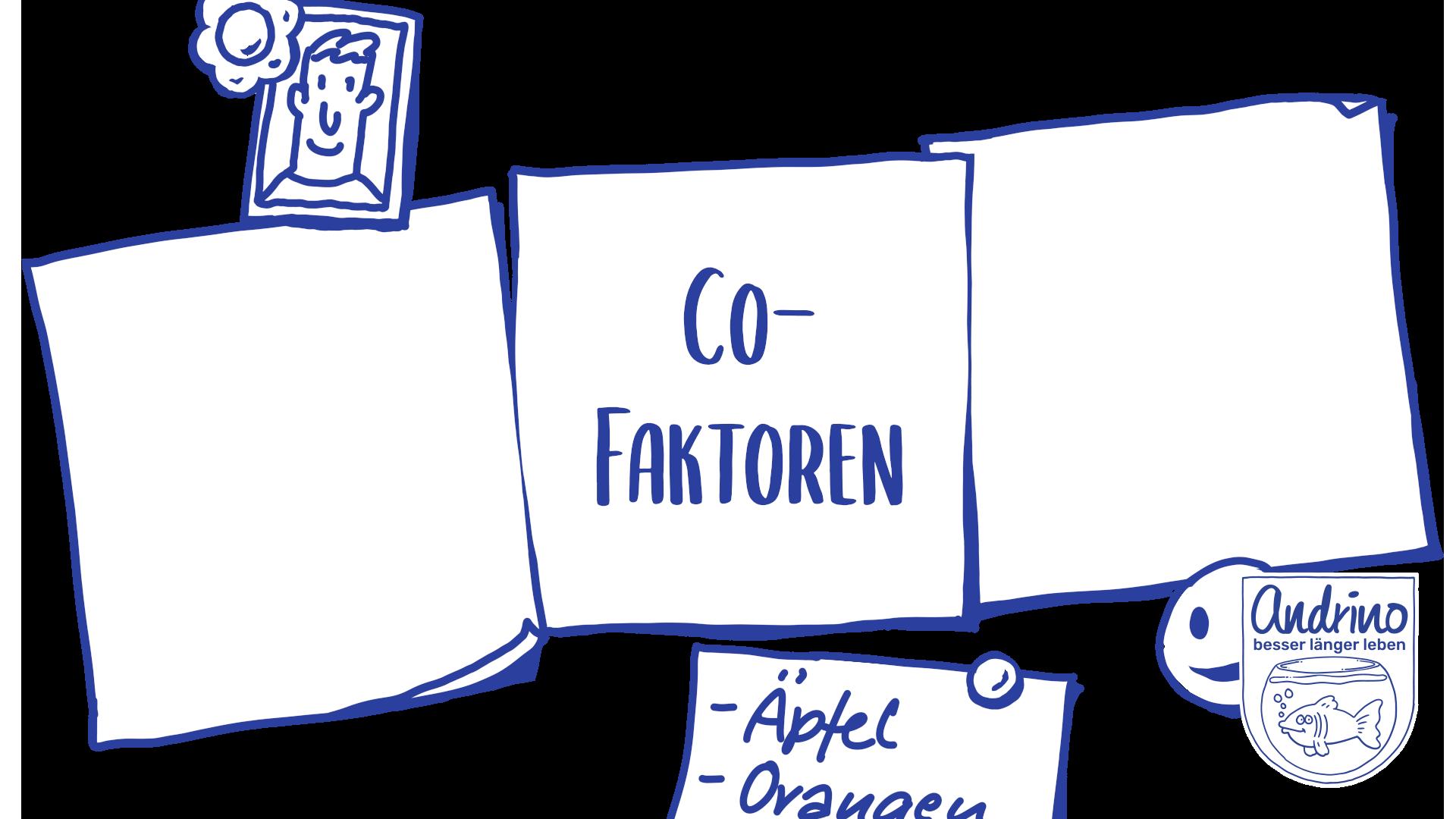 Cofaktoren – Wichtige Stoffe für unsere Mitochondrien