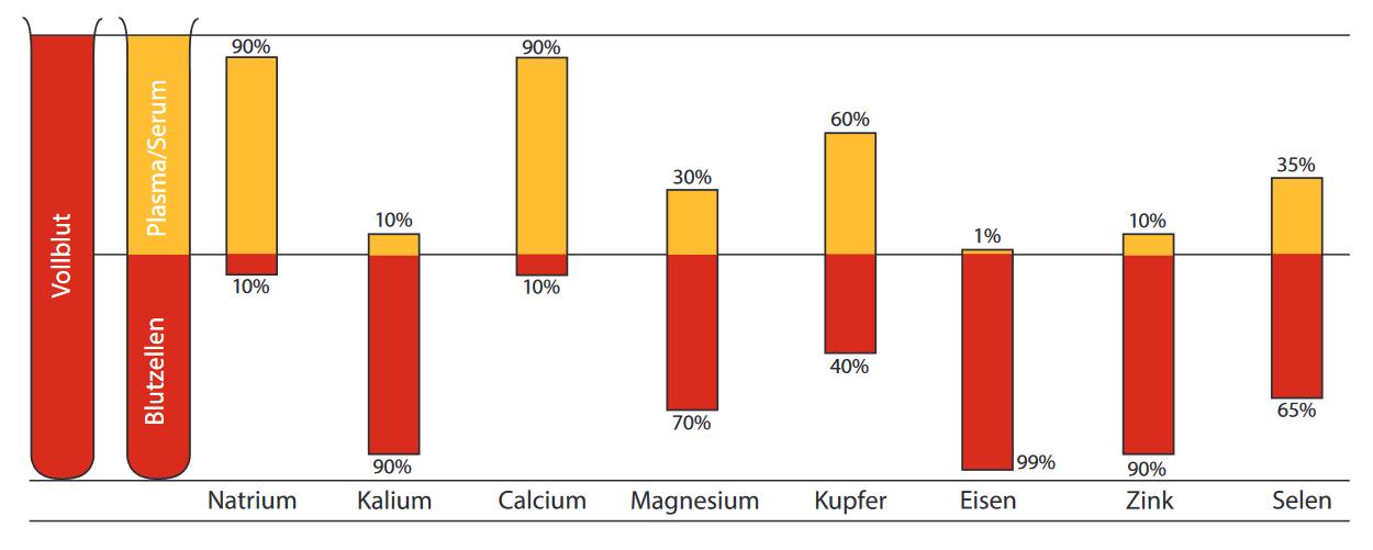 Verteilung Mikronährstoffe in Blutzellen und Plasma