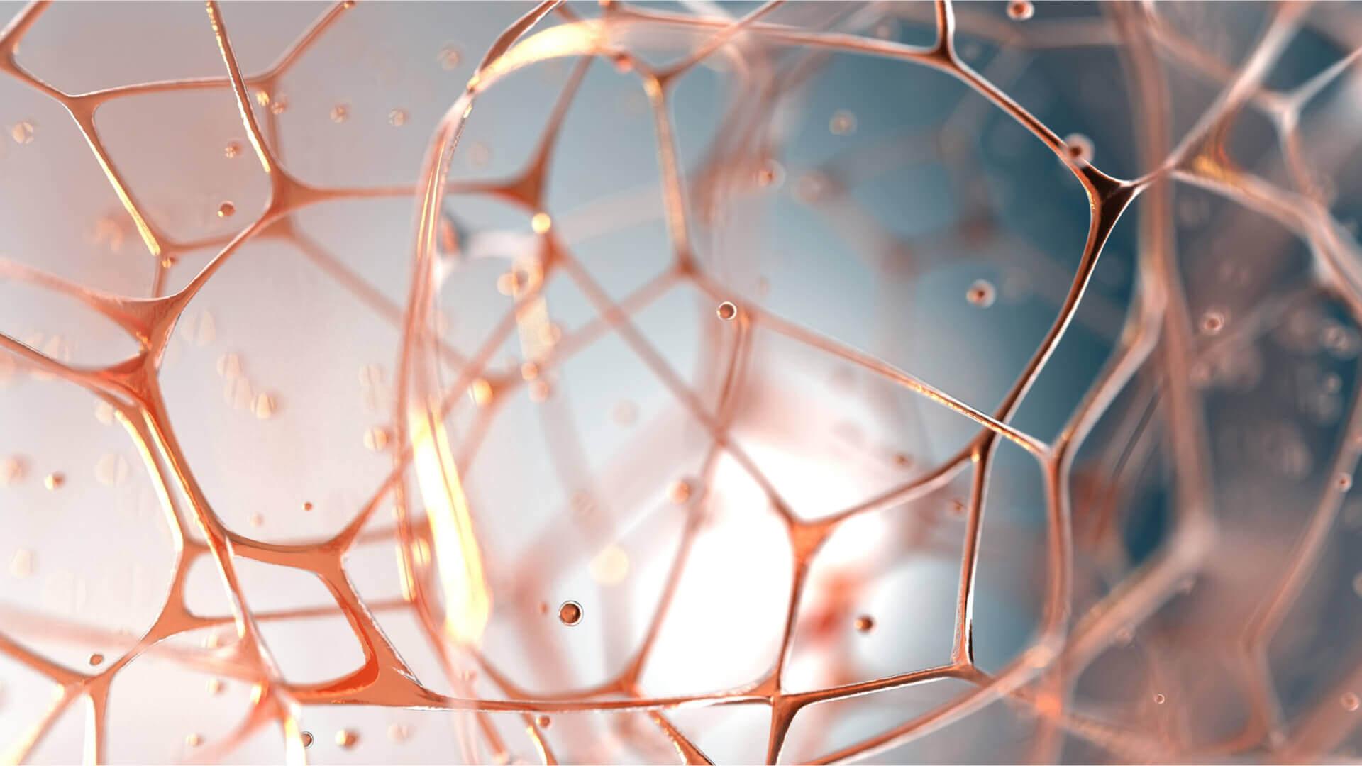 Bindegewebe, Grundgewebe, Matrix – viele Namen eine Bedeutung