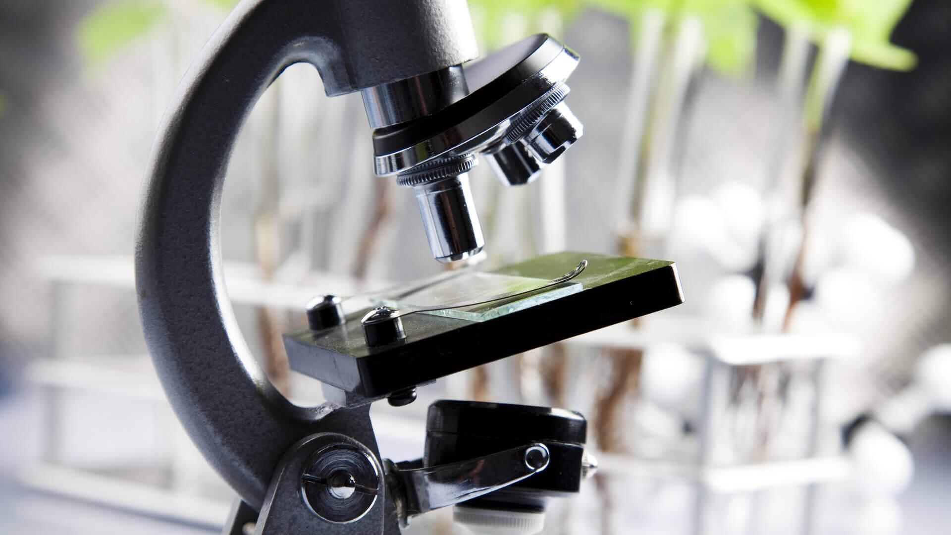 Testverfahren in der Biologischen Medizin: was kommt auf mich zu?