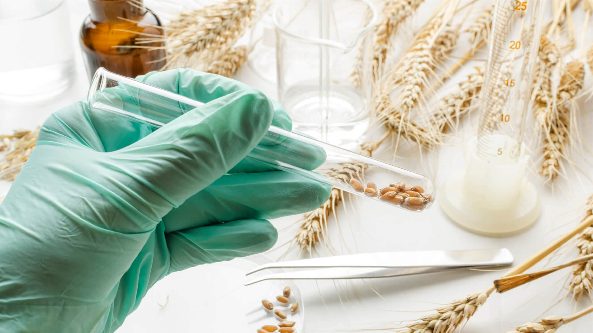 Unverträglichkeit gegen Gluten oder Weizen? Diese Tests helfen weiter